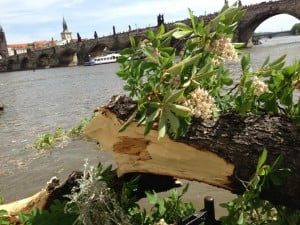 Broken tree branch on the edge of the terrace with Charles Bridge in the background.